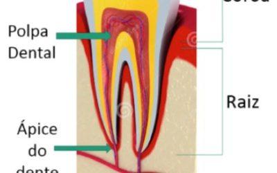 Tratamento ortodôntico e lesão periapical: qual a contra-indicação